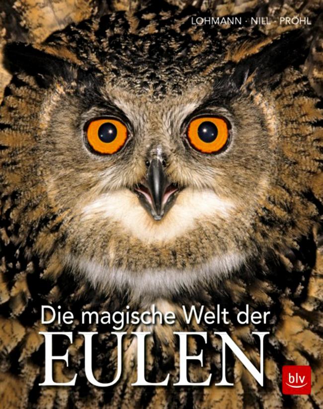 eulen, strigiformes, vögel, birds, fokus-natur