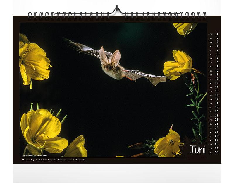 naturkalender, kalender, 2018, fokus-natur, fledermäuse, kalender 2018
