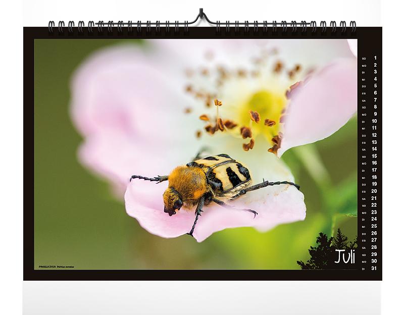 naturkalender, kalender, 2018, fokus-natur, käfer, insekten, kalender 2018
